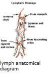 Lymph anatomical diagram